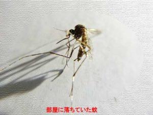 蚊 殺虫剤 蚊がいなくなるスプレー